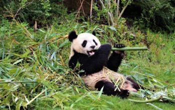 Bambustuch